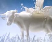 Песнь Стекла и Молока