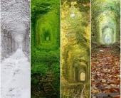 Тоннель любви в разные времена года