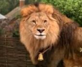Львовская байка