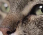 Будь котиком – прими успокоительное