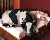 Dеfense поселил корову в квартире