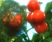 Ролик органического кетчупа