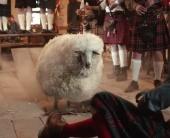 Так вот ты какое, шотландское веселье!