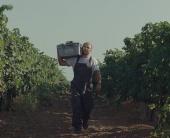 Как создается настоящее вино