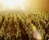 «Садочок» рассказал проурожайный год томатов