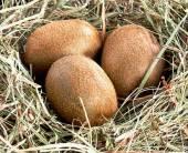 Яйца дляпрекрасного пола
